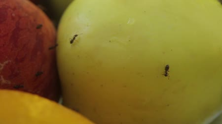 coisas : Ants on fruit. Close-up. Macro Stock Footage