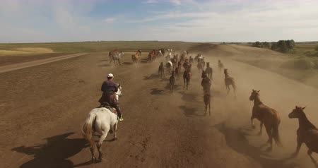 yırtıcı hayvan : Herd of wild horses running across plains 4K Stok Video
