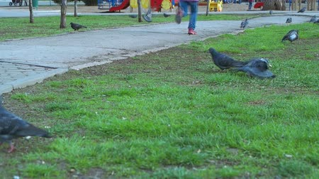 dovetail : Girl disperse pigeons Stock Footage