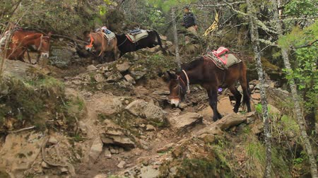 koňmo : horse on mountain in china