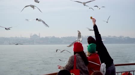 sea bird : istanbul, Turkey - March 2019: Unidentified people feeding seagulls with biscuits from a ferry