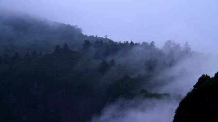 nevoeiro : Beautiful view of Wanfo peak in E'mei mountain with cloud and mist.
