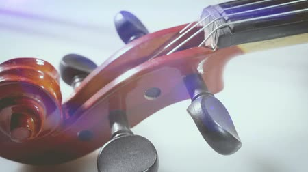 senfoni : String music instruments and arts. Close up violin on white background.Classic music and musical culture and entertainment Stok Video