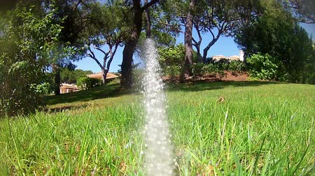 fresh water : Garden Irrigation Sprinkler watering lawn (Point of View footage)