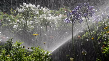 canteiro de flores : Garden Irrigation Spray watering flower bed (Shot C)