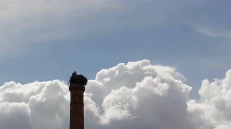 propagation : Storks standing in nest on top of old abandoned industrial chimney