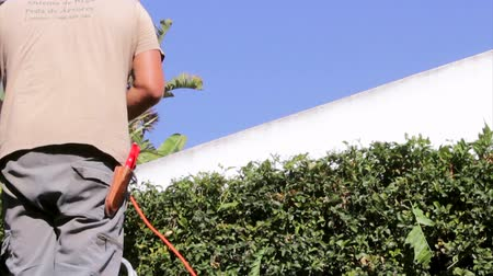 yards : Home Gardening Activity - Gardener cuting green fence border electric hedge trimmer