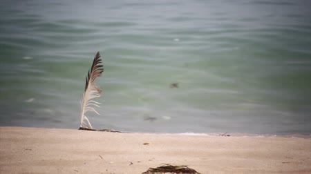sen : Seagull feather into the beach sand by the sea waves, in Algarve. Portugal