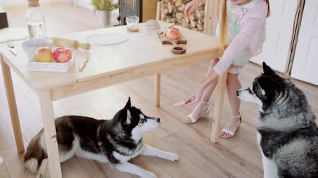 huskies : Girl cooksand feeds Huskies with apples  in the kitchen