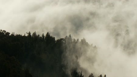 denteado : wispy clouds through mountain forest timelapse Vídeos