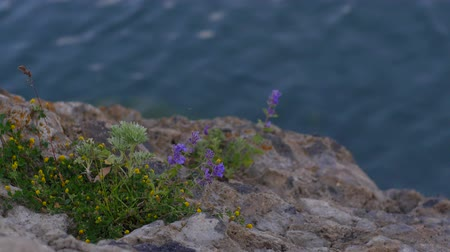 quad hd : Flowers on a Rocky River Bank.