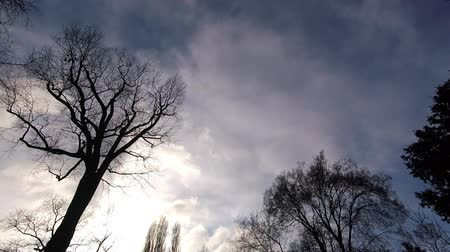rápido : Time Lapse Trees Against A Sunny Cloudy Sky With Fast Moving Clouds