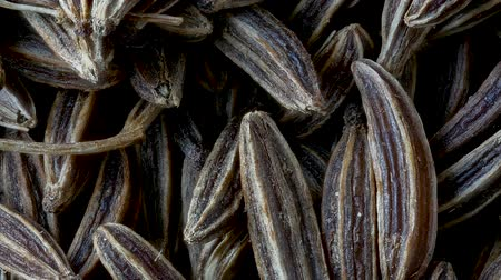 fennel : Close-up of Caraway Seeds, Carum carvi, Dark Food Background, Pan Shot