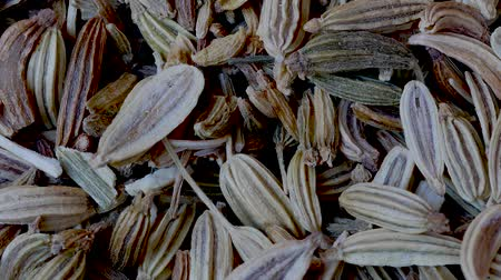 fennel : Close-up of Seeds of Fennel, Foeniculum vulgare, Food Background Pan Shot Stock Footage