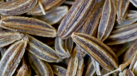 fennel : Close-up of Caraway Seeds, Carum carvi, Food Background, Zoom Out