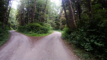 çatal : Slow Cruise Through Rain Forest Woods Leads to Fork in the Road