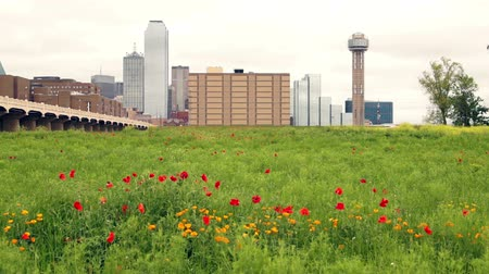 approaching subway : Dallas Texas City Skyline Downtown Trinity River Wildflowers