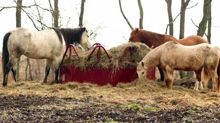 memeli : Horses Feed Rural Horse Ranch Livestock Stok Video