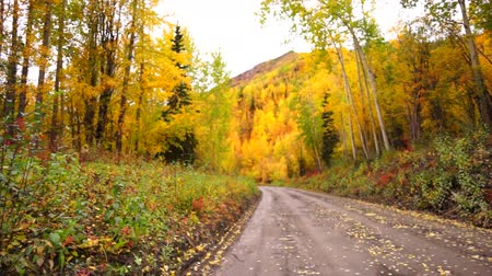 cena não urbana : Primitive Gravel Road Leads on Autumn Fall Foliage Alaska