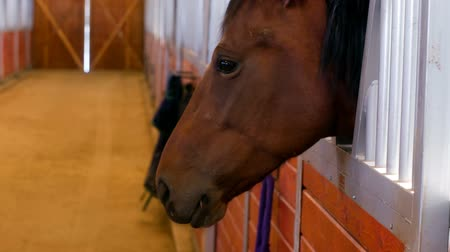 навес : Horse Sticks His Head out Stables Paddock