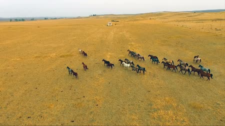 égua : A Herd of Horses Running Wild Stallions Equestrian Animals