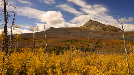 bölmek : Fall Season Peaks and Plants on the East Side of Glacier National Park Montana Stok Video