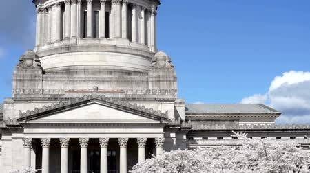 Washington State Capital Building Olympia Springtime Cherry Blossoms Stok Video
