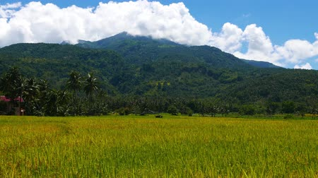 навес : A view of the active Hibok Hibok Volcano (also known as Catarman Volcano) from surrounding rice fields; Camiguin Island, Philippines. Стоковые видеозаписи