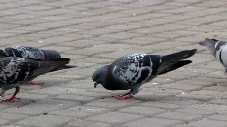 chodnik : pigeons on the square 4k