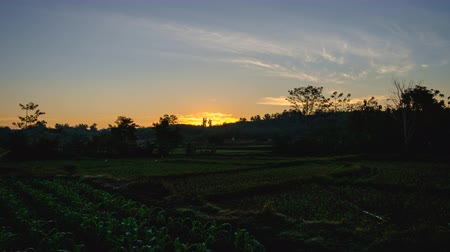 seeding : Time Lapse in the field with the sunrise in the morning of agriculture area Stock Footage