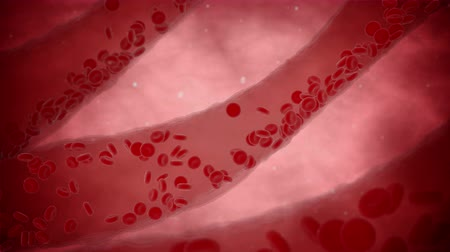 vene : Cellule del sangue flusso in vena. vista organismo interno. il video 4K Filmati Stock