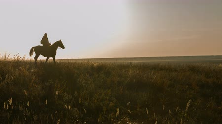 cavalinho : The man on a horse. beautiful sunset. field landscape