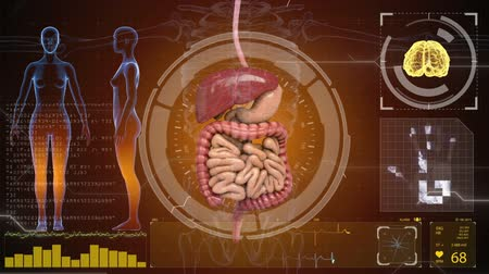 układ pokarmowy : digestive system, intestines on HUD futuristic background