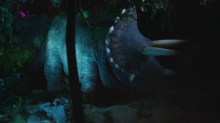 triceratops : triceratops in prehistoric jungle, night forest