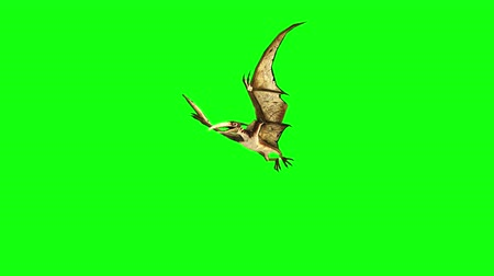 dinossauro : pterodactyl fly 3d animation. green screen 4k footage. Stock Footage
