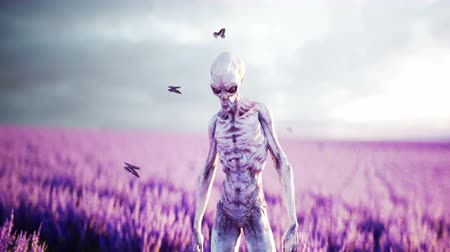 paranormaal : Alien with butterflies in lavender field. concept of UFO. Realistic 4k animation.