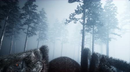 dead forest : scary gigant spider in fog night forest. Fear and horror. Mistic and halloween concept. Realistic 4K animation.