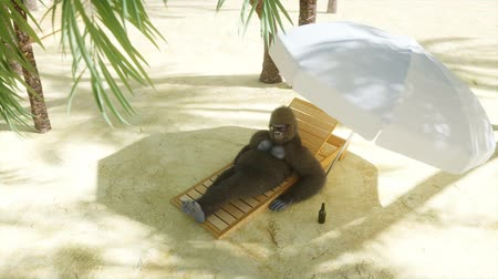 sea monkeys : Funny gorilla in glasses lies on a deckchair. Beach and palms. Spa, resort concept. Realistic 4K animation. Stock Footage