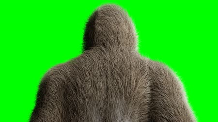 gorillas : Funny brown gorilla stay idle. Super realistic fur and hair. Green screen 4K animation.