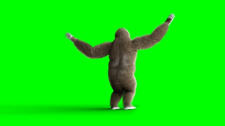 gorillas : Funny brown gorilla dancing. Super realistic fur and hair. Green screen 4K animation. Stock Footage