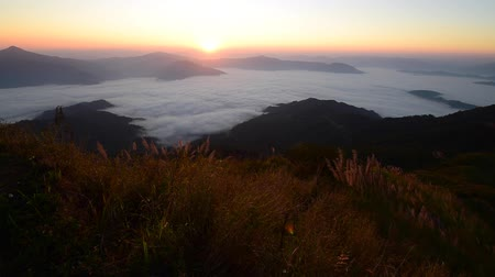 rai : Beautiful landscape for seeing the mist at Doi Pha Tang, Chaingrai province is a famous tourist destination in northern Thailand.