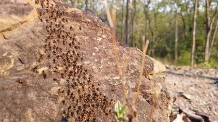 termite : Termites are walking on the stone