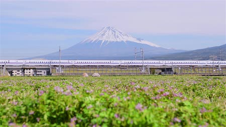 shinkansen : The purple grass on the edge of the railway line has Mt. Fuji in the background.