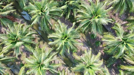 samut : Aerial view of coconut farm in Samut sakhon province, Thailand