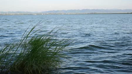 Some grasses can grow in shallow water, even though most of the reservoirs are deep.