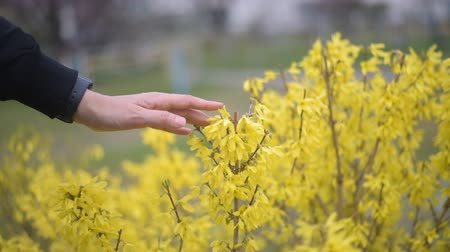 Female hand touching yellow flowers closeup.