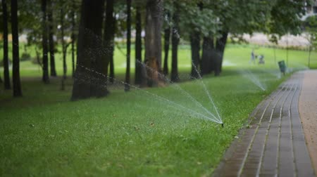 орошение : watering the lawn in a city park