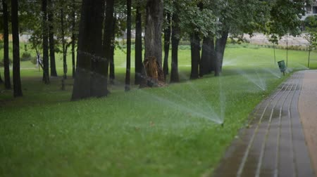 watering the lawn in a city park