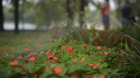 floweret : watering flowers in a city park