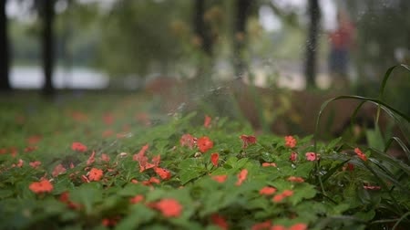 окропляет : watering flowers in a city park